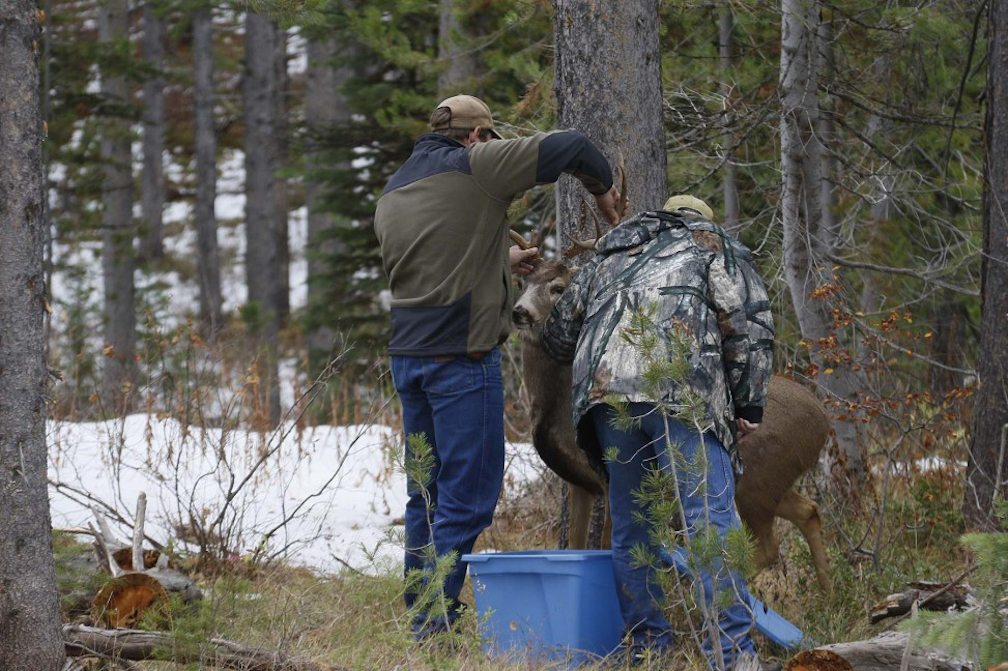 Deer decoy on west slope gets pumped full of lead for Wyoming game and fish jobs