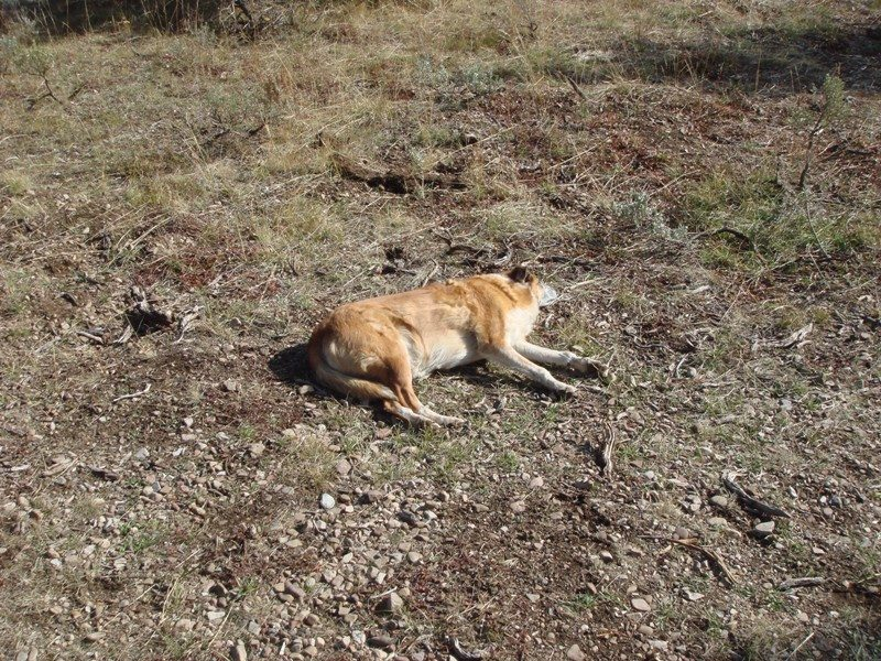 Investigation underway into multiple dog-poisoning incidents